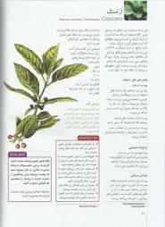 نمونه صفحات فرهنگ گیاهان دارویی